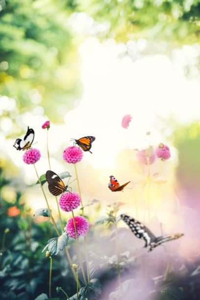 Butterfly background picture id907571052?b=1&k=6&m=907571052&s=612x612&w=0&h=pn8bsxxx3ccdocconvfz4alkn6xf 9hgtcx0zmym pe=