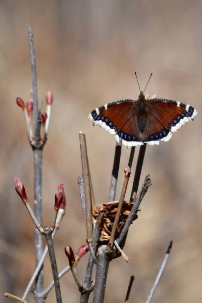 Butterfly Beauty stock photo