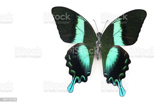 Butterfly beauty picture id184113728?b=1&k=6&m=184113728&s=612x612&h=hiqxvtclzrnywnogtl8bnhu1 0mijt0j3rtn8yfqbdg=