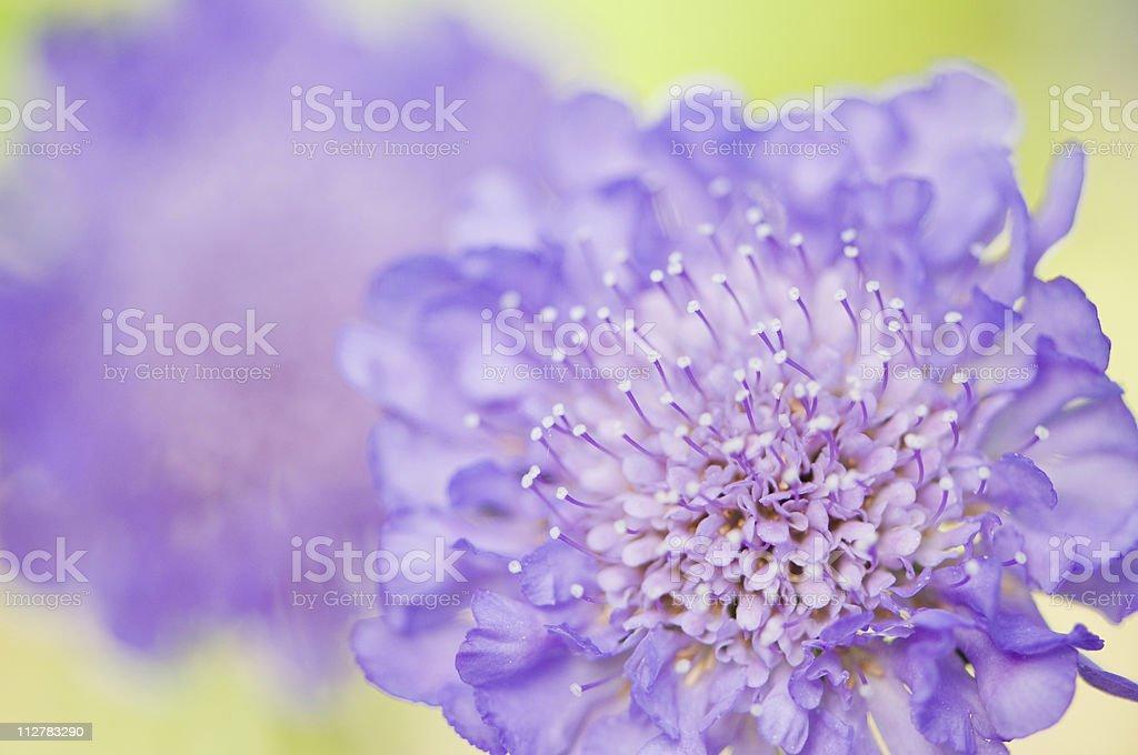 Butterfly Blue flower stock photo