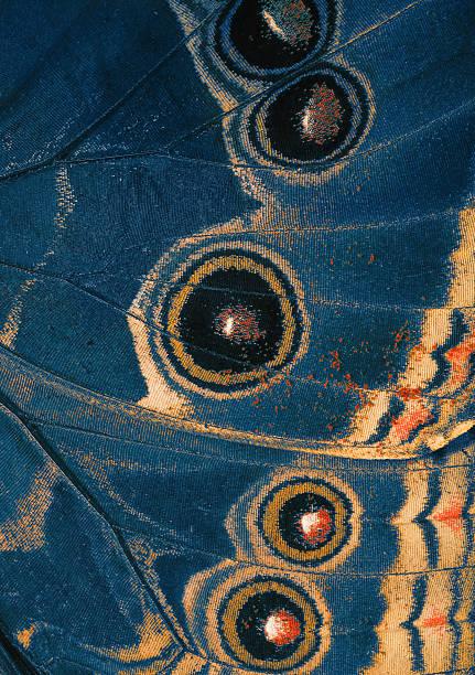 Butterfly blue wing bottom side picture id456876477?b=1&k=6&m=456876477&s=612x612&w=0&h=c5xt2ovoq acffwu4gwvlqorzlisnkz2n7h49bok7j8=