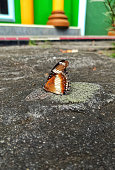 A butterfly can be seen alighting on the ground