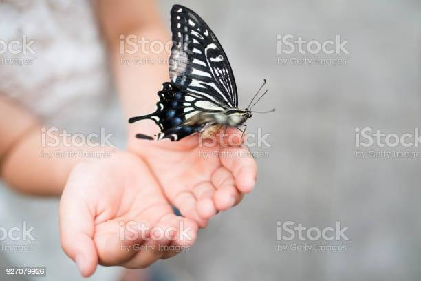 Butterfly caught in the hands of children picture id927079926?b=1&k=6&m=927079926&s=612x612&h=if5wsvk pknymtvwdd8a4cnpb7h19 uqeathjzoqocc=