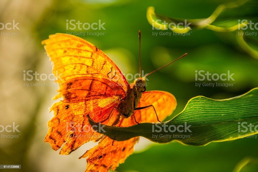 Butterfly close up stock photo