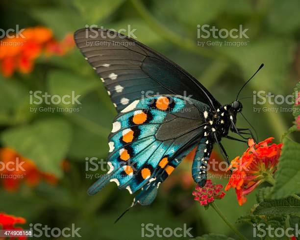 Butterfly closeup picture id474908158?b=1&k=6&m=474908158&s=612x612&h=3jnhcaexmu8eji4 cvwt3pmf52rgmdrwxbtksiqmqpa=