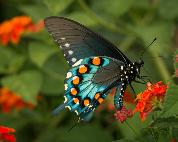Mariposa primer plano - foto de stock