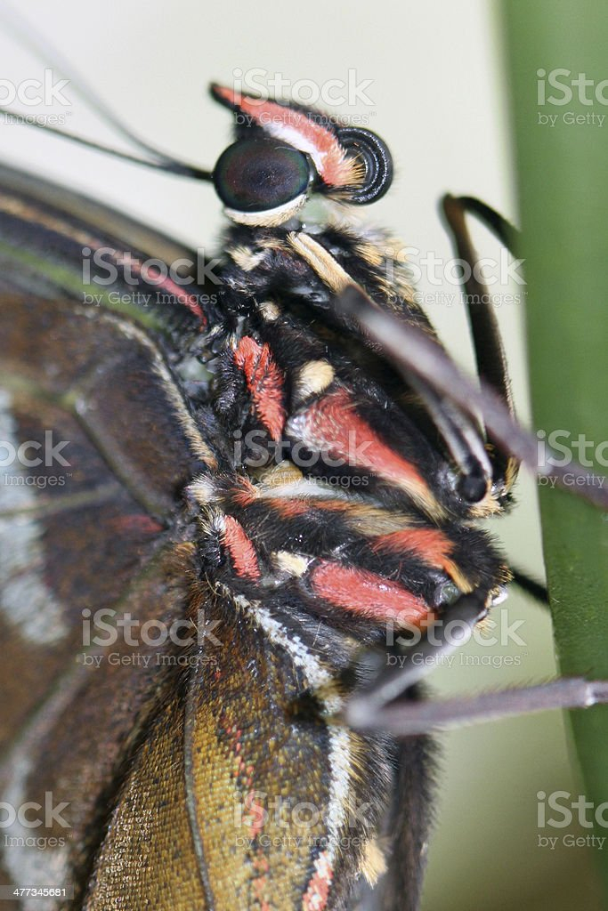 butterfly closeup stock photo