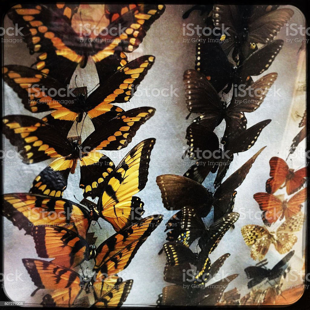 Butterfly Collection Case stock photo