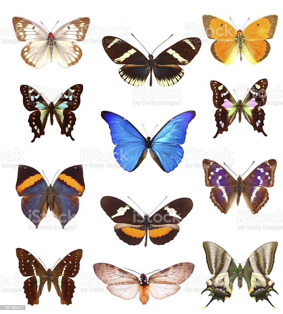 Butterfly collection royalty-free stock photo