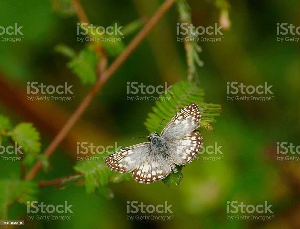 Butterfly, Costa Rica stock photo