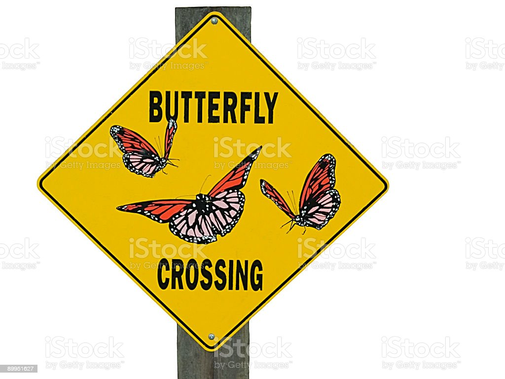 Butterfly Crossing royalty-free stock photo