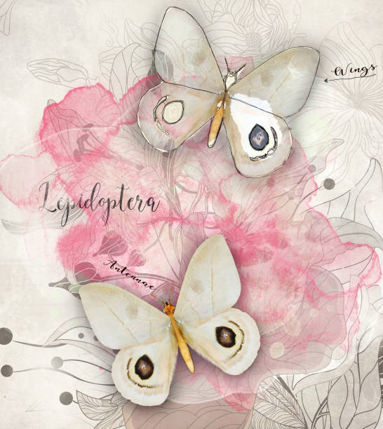 Butterfly digital greeting card picture id1216557929?b=1&k=6&m=1216557929&s=612x612&w=0&h=tppkpb9xedhixlcqtalmfuk3 niepff4hj7y w mea0=