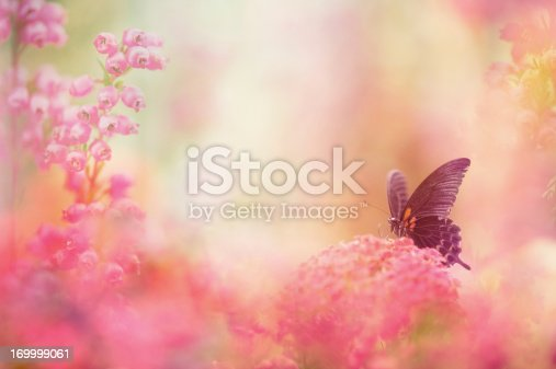 999676880 istock photo Butterfly dreams 169999061