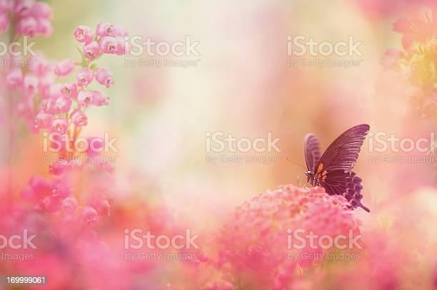 Butterfly dreams picture id169999061?b=1&k=6&m=169999061&s=612x612&h=lx9ht7envupqrsx6c71vmwrf6s 6ptl4bg sxr0c0zo=