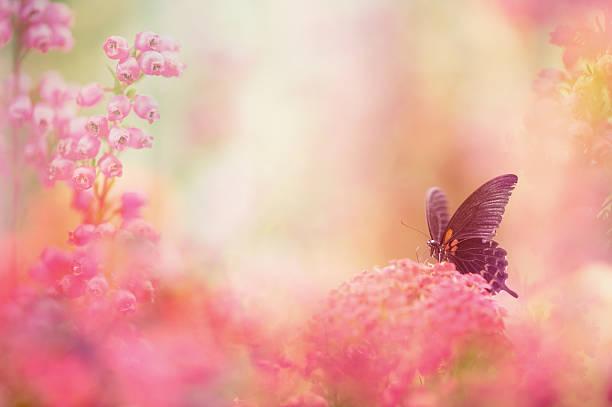 Butterfly dreams picture id169999061?b=1&k=6&m=169999061&s=612x612&w=0&h=wds13jlxu69pbp256sxczx8cfq1i7jhwcjebc0rhmss=