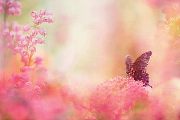 Butterfly dreams stock photo