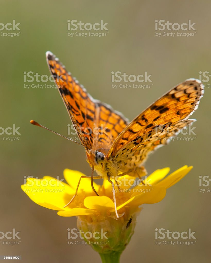 Butterfly drink nectar stock photo