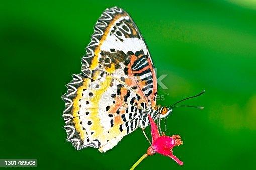 Butterfly drinking juice from flower.