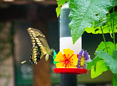 Butterfly drinking water. Picture from the city of Foz do Iguaçu, Southern of Brazil