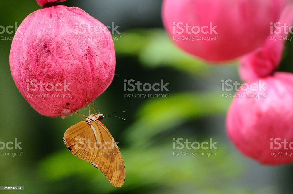 Butterfly eat food that made from human in garden foto royalty-free