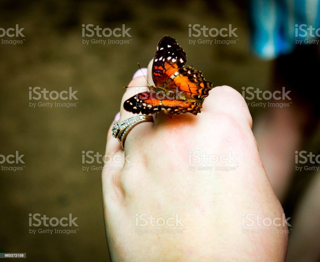 butterfly encounter royalty-free stock photo
