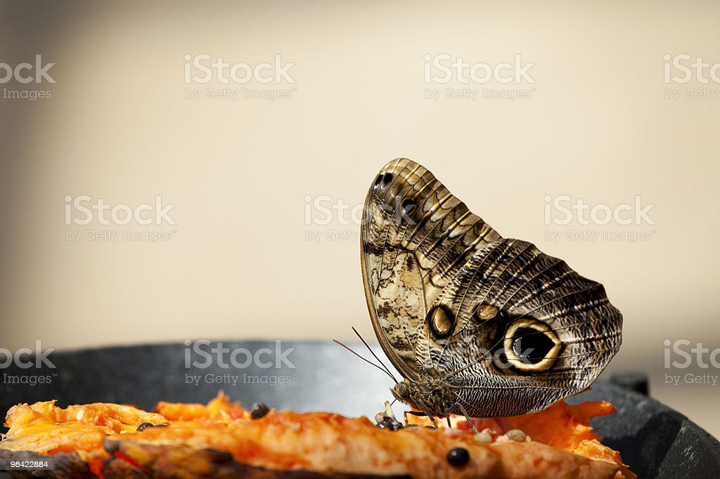 Butterfly Eye royalty-free stock photo
