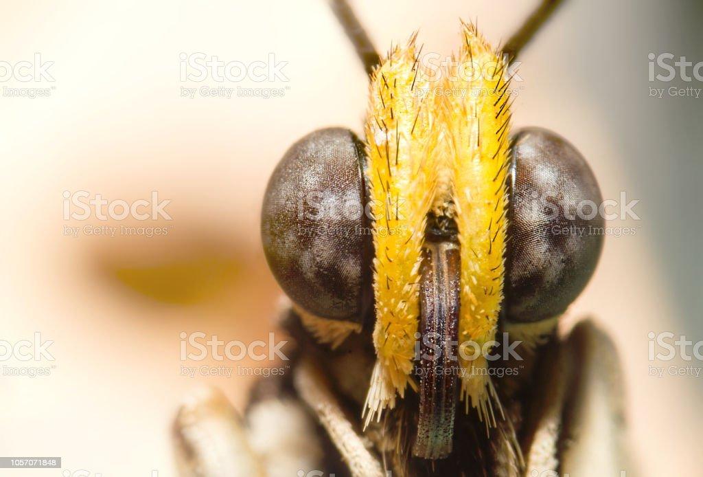 Ojos de mariposa. Fotografía macro de mariposas. Grandes ojos negros. Extremo agudo retrato. Aislado en fundamento amarillo. - foto de stock