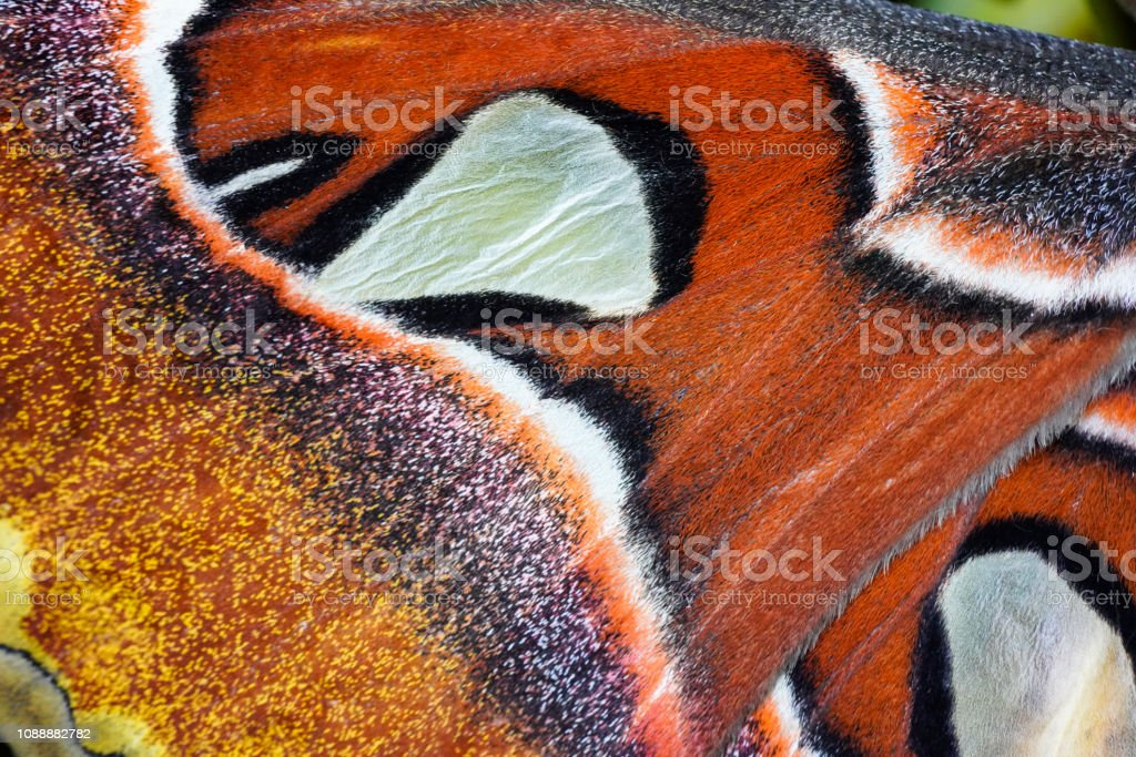 Butterfly farm for making painting. stock photo