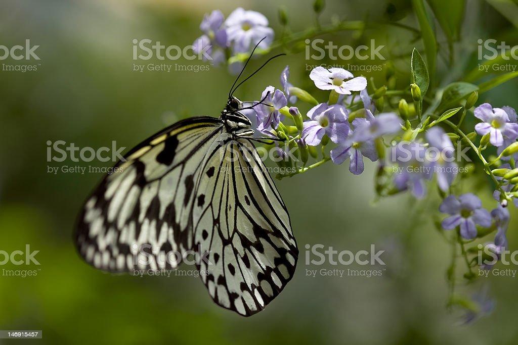 Butterfly Feeding stock photo