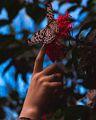 A butterfly perches carefully on an outstretched finger in the middle of a nature reserve.