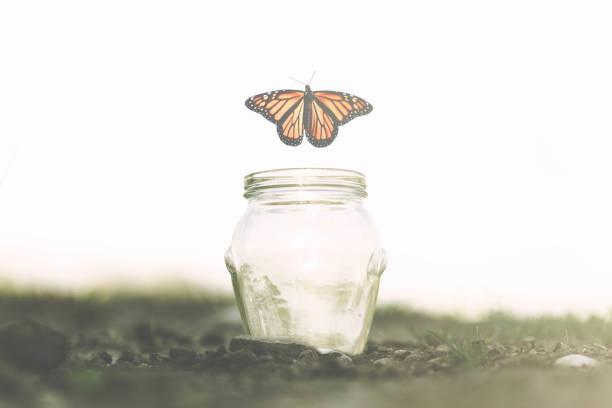Butterfly flies away fast from the glass jar in which she was trapped picture id1071296856?b=1&k=6&m=1071296856&s=612x612&w=0&h=er4zfddrpkjzbrfhvn9jo71uie4q0nrykdqr4wwwkny=