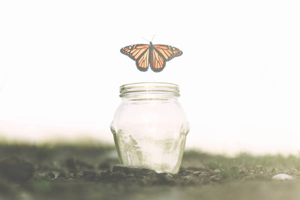butterfly flies away fast from the glass jar in which she was trapped butterfly flies away fast from the glass jar in which she was trapped reincarnation stock pictures, royalty-free photos & images