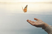 butterfly flies free from a woman's hand