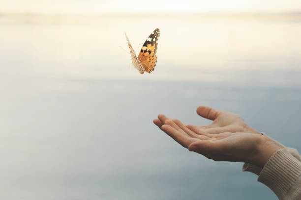 butterfly flies free from a woman's hand stock photo