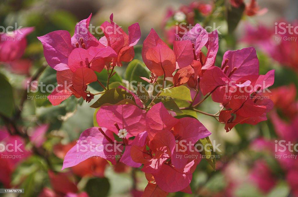 Butterfly Flower stock photo