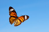 Butterfly flying against a blue sky