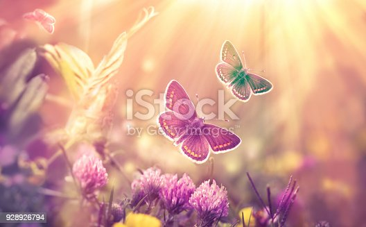 Butterfly flying in a meadow of clover - over clover flowers (beautiful nature, beauty in nature)