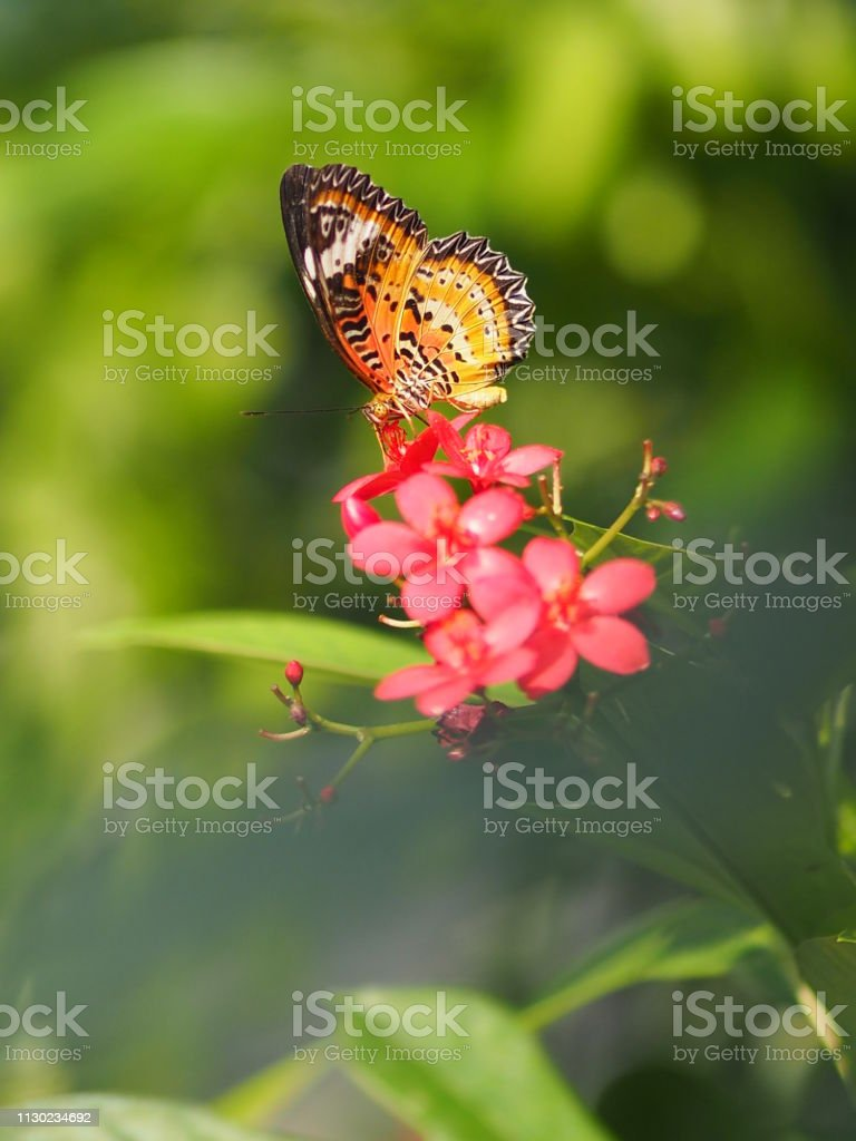 Butterfly flying on the flower nature animal insect