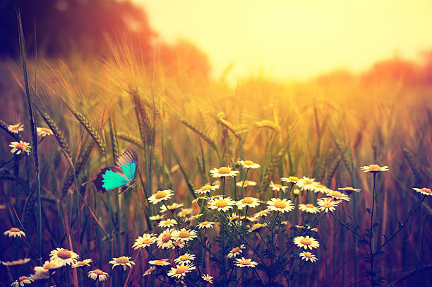 Butterfly flying spring meadow daisy flowers picture id476009968?b=1&k=6&m=476009968&s=612x612&w=0&h=1a910ggyovac2xwr86msokhu7uefucytn7jyn9uvmkm=