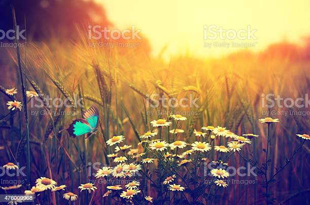Photo of Butterfly flying spring meadow daisy flowers