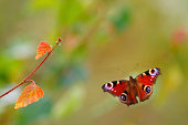 Butterfly flying to twigs.