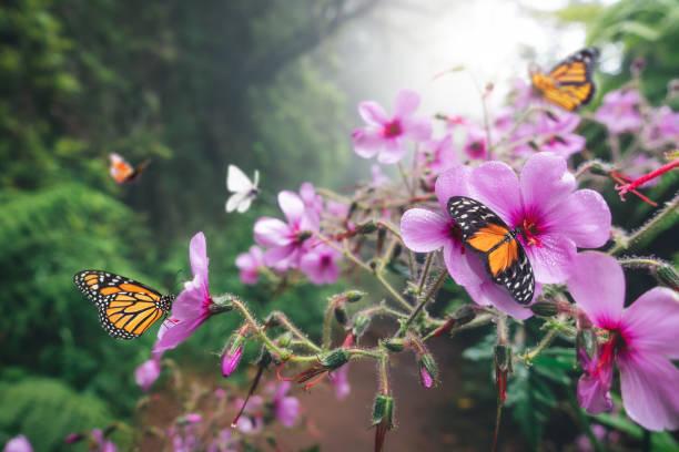 Butterfly forest picture id1205668039?b=1&k=6&m=1205668039&s=612x612&w=0&h=izcxgqa p2odqlyyiwz1mjkbcklibgg53peoj8h0jm8=