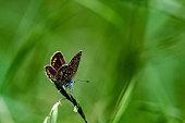 Papillon sur sa branche
