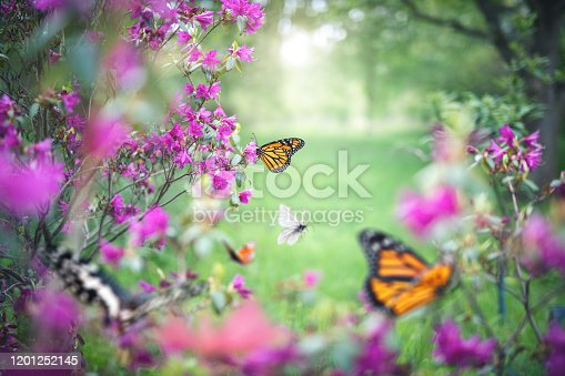 Garden full of colorful butterflies.