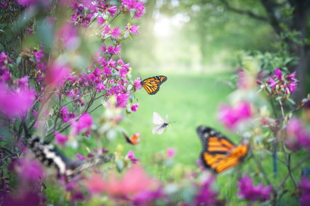 Butterfly garden picture id1201252145?b=1&k=6&m=1201252145&s=612x612&w=0&h=oimzzafa95mr0kqw6hp79bzm61e7ikrg3vbe35txee8=