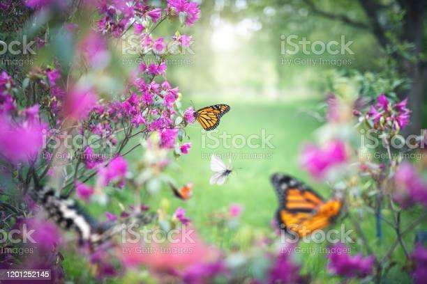 Photo of Butterfly Garden