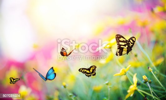 Summer meadow with colorful butterflies.