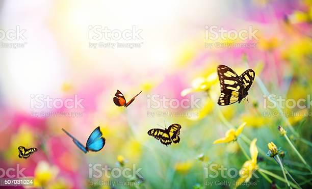 Butterfly garden picture id507031024?b=1&k=6&m=507031024&s=612x612&h=g yrmxbu5pox37ntj6 2mqxfwsurpb pqp2iq6tuwiw=