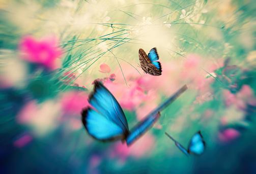 Summer meadow with blue morpho butterflies.