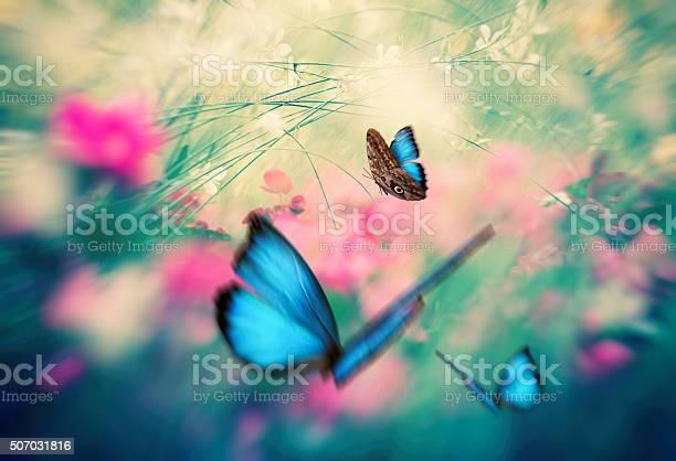 Butterfly garden picture id507031816?b=1&k=6&m=507031816&s=612x612&h=m2 ucwtrxyve2y00tvmlrf631qy42 jtorerizavdme=